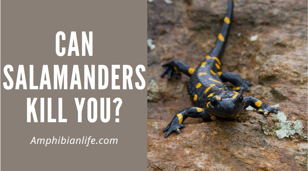Are Salamanders Poisonous