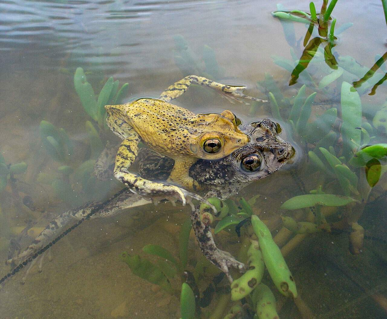 What do toads need to survive article