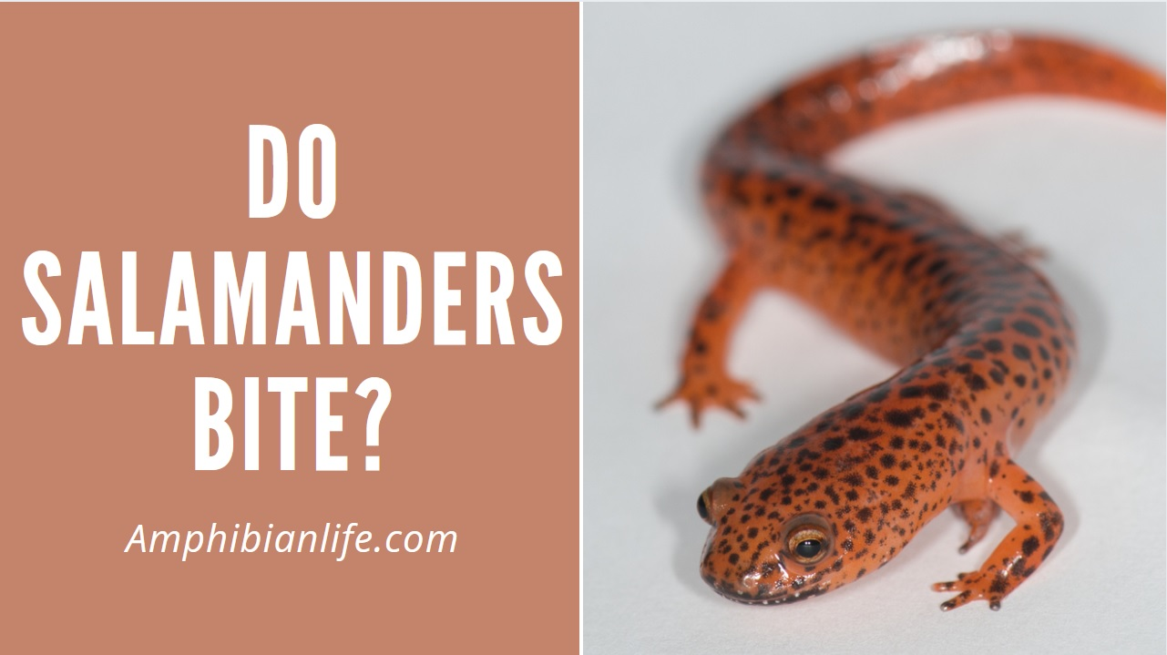 Do Salamanders Bite?